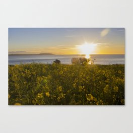 Stinging Nettle Canvas Print