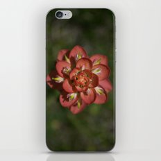 Indian Paintbrush iPhone Skin