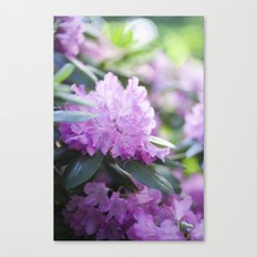 Purple Rhododendron - Spring Flowers Canvas Print