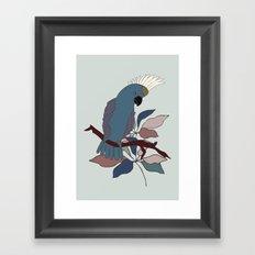 Parrot   Cockatoo Framed Art Print