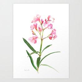 Nerium Art Print