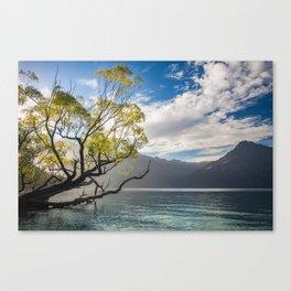 Beautiful Morning Light at Wilson Bay, New Zealand Canvas Print