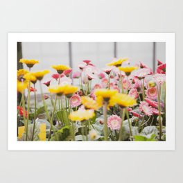 Gerber Daisies in Strawberry Lemonade  |  The Fresh Flower Collection Art Print