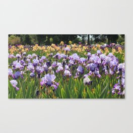 Blue and Yellow Irises Canvas Print