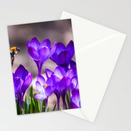 Flying bee over purple crocuses at flower bed in garden. Spring time. Stationery Cards