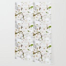 White blooming Wallpaper