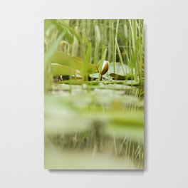 young lily Metal Print