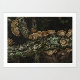Thoughtful and Deep - Mushrooms in Forest I Art Print