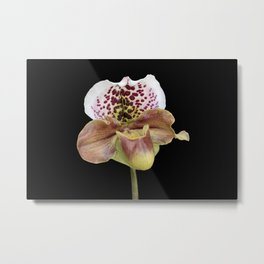 isolated orchid on black background Metal Print