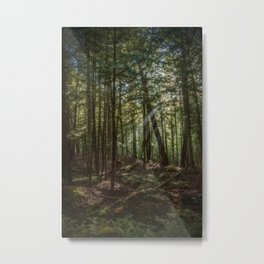 Rays of Sun in the Forest Metal Print