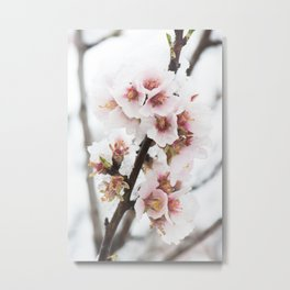 Almond tree flowers covered by snow Metal Print