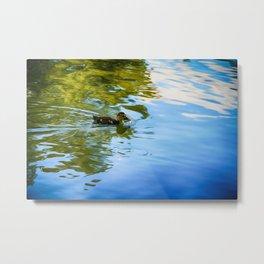 Swimming - Colorful Metal Print