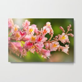 Aesculus red chestnut tree blossoms Metal Print