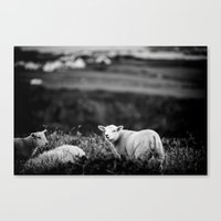 lamb Canvas Prints featuring Lamb by BethWold
