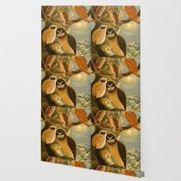 Album de aves amazonicas - Emil August Göldi - 1900 Amazon Animals Exotic Owls Wallpaper