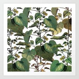 climbing plants Art Print