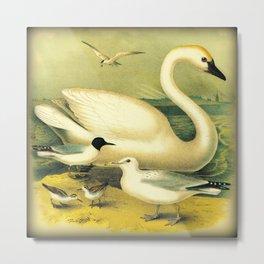 Swan & Friends Metal Print