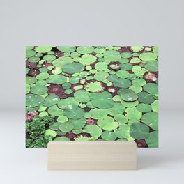 Nymphaeaceae Mini Art Print