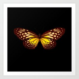 Butterfly - Yellow Brown & Black - Back Lit Glow Art Print