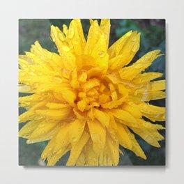Yellow Chrysanthemum Metal Print