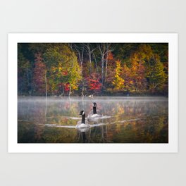 Two Canada Geese swimming in Fall Art Print
