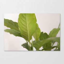 Hojas verdes (2) (green leafs) Canvas Print