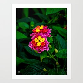 Flower. Art Print