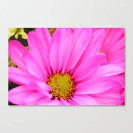 Pink Daisy Petals macro Canvas Print