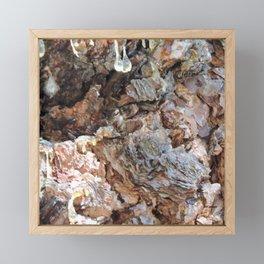 TEXTURES: Weeping Big Cone Pine Bark Framed Mini Art Print