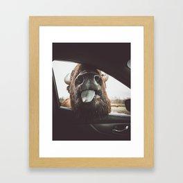Bison Wassup Framed Art Print