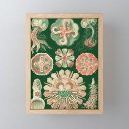 Ernst Haeckel Discomedusae Jellyfish Framed Mini Art Print
