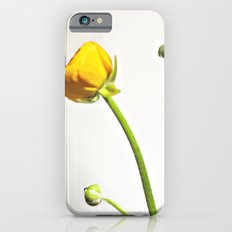 Golden Yellow Ranunculus Flowers on White iPhone 6s Slim Case