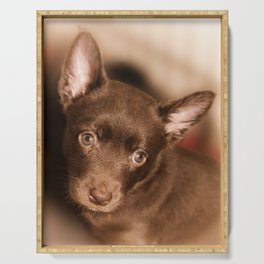 Puppy- Australian Kelpie Serving Tray