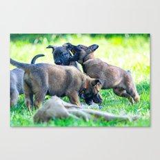 Wild Puppies Herder-Shepherds Canvas Print