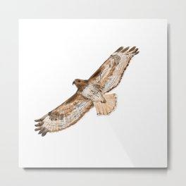 That's a Redtail Metal Print