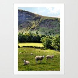 Lucky Sheep Art Print