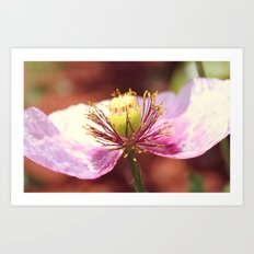 Pollen and a flower Art Print