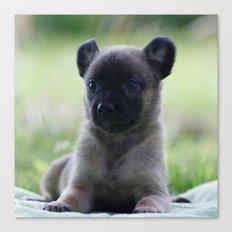 A yellow Shepherd puppy Spok Canvas Print