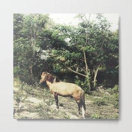 Uphill Horse Metal Print
