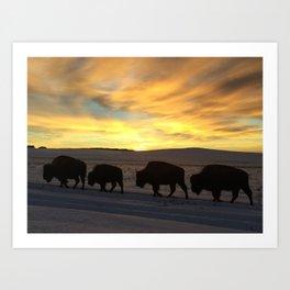 Bison Sunrise Art Print