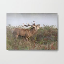 Richmond Park  Metal Print