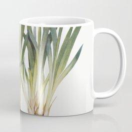 Iris Pumila from The genus Iris by William Rickatson Dykes (1877-1925) Coffee Mug