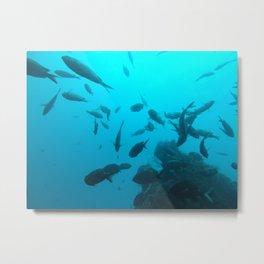 Fish on the Pinnacle  Metal Print