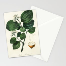 Poison nu (Strychnos nux-vomica) illustration from Medical Botany (1836) by John Stephenson and Jame Stationery Cards