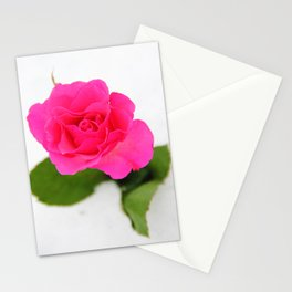 Pink Rose in the Snow Stationery Cards
