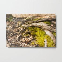 Moss & Roots Metal Print