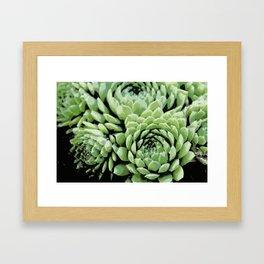 Succulent plants Framed Art Print