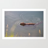 beaver Art Prints featuring Beaver by Blue Gaea