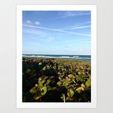 Hobe Sound Beach Art Print