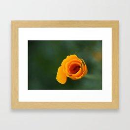 California Poppy Dreaming 2 Framed Art Print